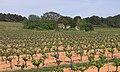 Castelnau-de-Guers, Hérault 04.jpg
