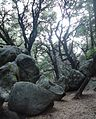 Castle Rock State Park in California with rocks and trees and sky.JPG