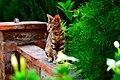 Cat Style.jpg