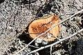 Cavités dans des bûches de peuplier blanc (66).JPG