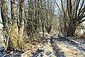 Ceļš ar veciem vītoliem gar malu.The road with the old willows along the edge - panoramio (1).jpg
