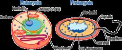 typer av celler