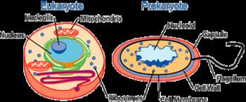 Schema di cellule procariotiche ed eucariotiche