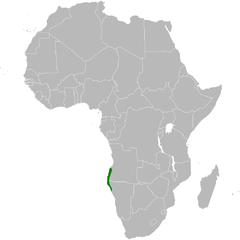 Certhilauda benguelensis distribution map.png
