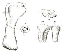 Drawing of arm bones