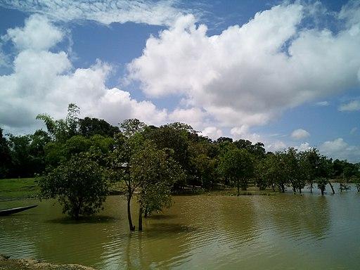 Chatla wetland