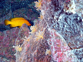 Hydrothermal vent microbial communities unicellular organisms that live and reproduce in a chemically distinct area around Hydrothermal vents