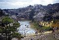 Cherry Blossom Festival 1955 - Orio, Yahatanishi Ward, Kitakyushu, Fukuoka Prefecture (9).jpg