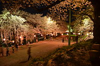 Cherry Blossoms on Eboshiyama, Nanyo Japan.jpg