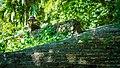 Chiang Mai - Wat Palad (23869622834).jpg