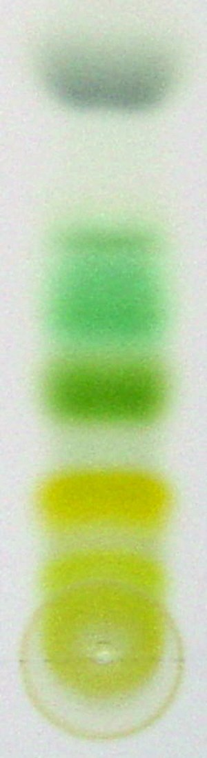 Xanthophyll - Thin layer chromatography is used to separate components of a plant extract, illustrating the experiment with plant pigments that gave chromatography its name. Plant xanthophylls form the bright yellow band next to the green