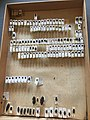 Chrysomelidae collection, Natural History Museum, London 04.jpg