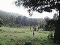Ciénega Grande abajo - panoramio.jpg