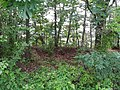 Civil War earthworks in the woods, Mount Eagle Park.jpg