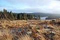 Clear Fell Near Loch Riecawr - geograph.org.uk - 1063485.jpg