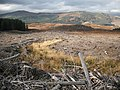 Clear felled area, Strathmashie Forest - geograph.org.uk - 1552627.jpg