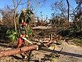 Clearing fallen trees (37074783112).jpg