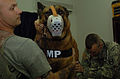 Clinic keeps K9s in check DVIDS37476.jpg