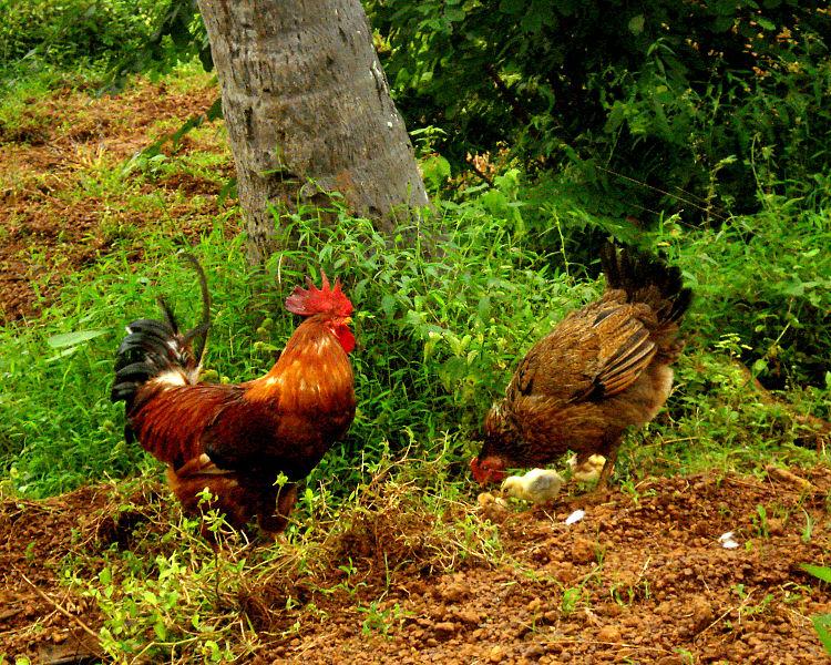 Hot naughty mature chicks