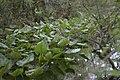Coconut Creek, FL, U.S. - panoramio (2).jpg