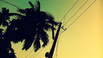 Coconut tree village.jpg