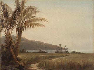 Cocospalmer ved havet, St. Thomas