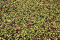 Coffee beans (6940585030).jpg