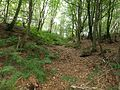 Coilsfield Deer Hay, Tarbolton - ditch system narrowing from bottom to top, South Ayrshire, Scotland.jpg