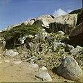 Collectie Nationaal Museum van Wereldculturen TM-20029562 Landschap met dolomieten en cactussen Aruba Boy Lawson (Fotograaf).jpg