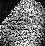 Columbia Glacier, Calving Terminus, September 15, 1975 (GLACIERS 1268).jpg