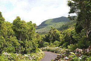 Serreta (Angra do Heroísmo) - A roadway in the foothills of Santa Bárbara in the parish of Serreta