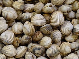 8 clams for the clam xxx pawn - 4 8