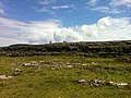 Cow on hill, Inishmore (6023721557).jpg