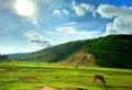 Cows Feeding On Grass Field Near A Tila (43811652132).png