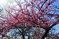 Crab tree 2 (6982956029).jpg
