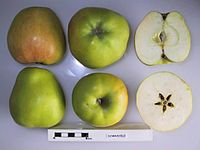 Cross section of Domnicele, National Fruit Collection (acc. 1948-644).jpg