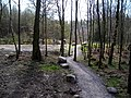 Cycle Trail in Dalbeattie Forest - geograph.org.uk - 392687.jpg