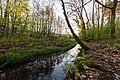 Dülmen, Kirchspiel, Naturschutzgebiet -Franzosenbach- -- 2017 -- 6997.jpg