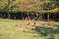 Dülmen, Wildpark -- 2011 -- 2571.jpg