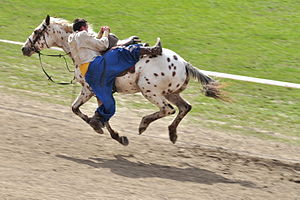 Jigit - Modern horse and rider