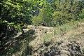 Dacian Fortress of Capalna 025.jpg