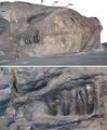 Dakosaurus andiniensis.png