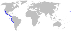 Range of the diamond stingray