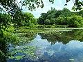 Davidson Mill Pond, South Brunswick, New Jersey 2 July 2011 - panoramio (5).jpg