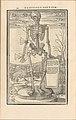 De dissectione partium corporis humani libri tres MET DP257234.jpg