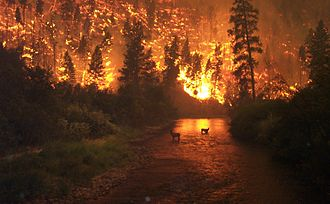 Bitterroot National Forest - Wildfire in the forest as photographed on August 6, 2000
