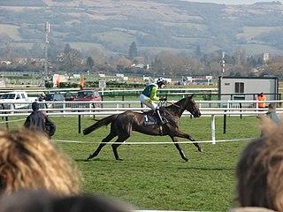 Denman (horse) 21st-century Irish racehorse