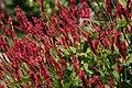 Denver Botanic Gardens (3855014270).jpg