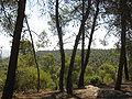 Dibeen Trees.jpg