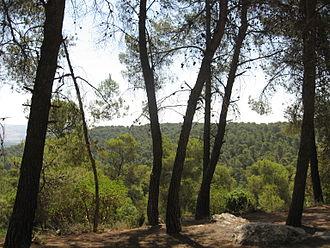Nature reserves in Jordan - Vista in Dibeen